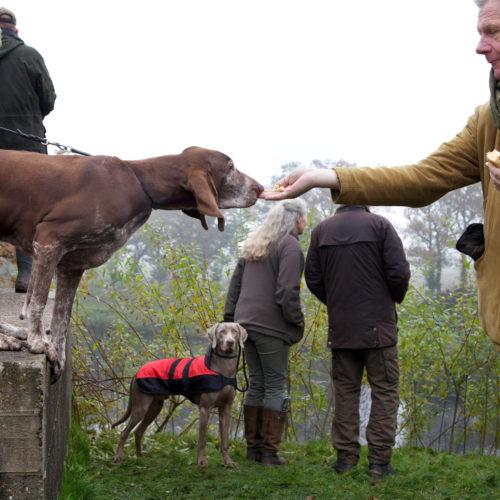 Nederland, Bunnik, 14 november 2016 Nimrod 2016. In de weilanden rond Fort bij Vechten is vandaag het Nederlands Kampioenschap jachthond. De jachthondenproef bestaat uit diverse oefeningen waarbij de honden wild moeten zoeken. Zo'n 3500 toeschouwers, veel met hond, zijn aanwezig om te supporten. Foto: Stijn Rademaker/HH